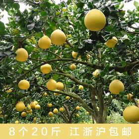 马站四季柚周末可采摘,尝鲜开始啦!