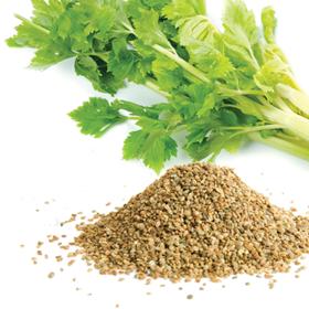 芹菜籽精油 - 法国农场进口 美白淡斑 有机