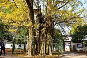 【杭州必体验】五云山徒步-西湖群山初级徒步线路