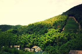 【杭州必体验】重走蒋公道,莫干山古道徒步一日游