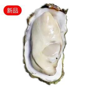 """正宗乳山牡蛎10斤装——来自""""中国北方牡蛎第一市"""""""