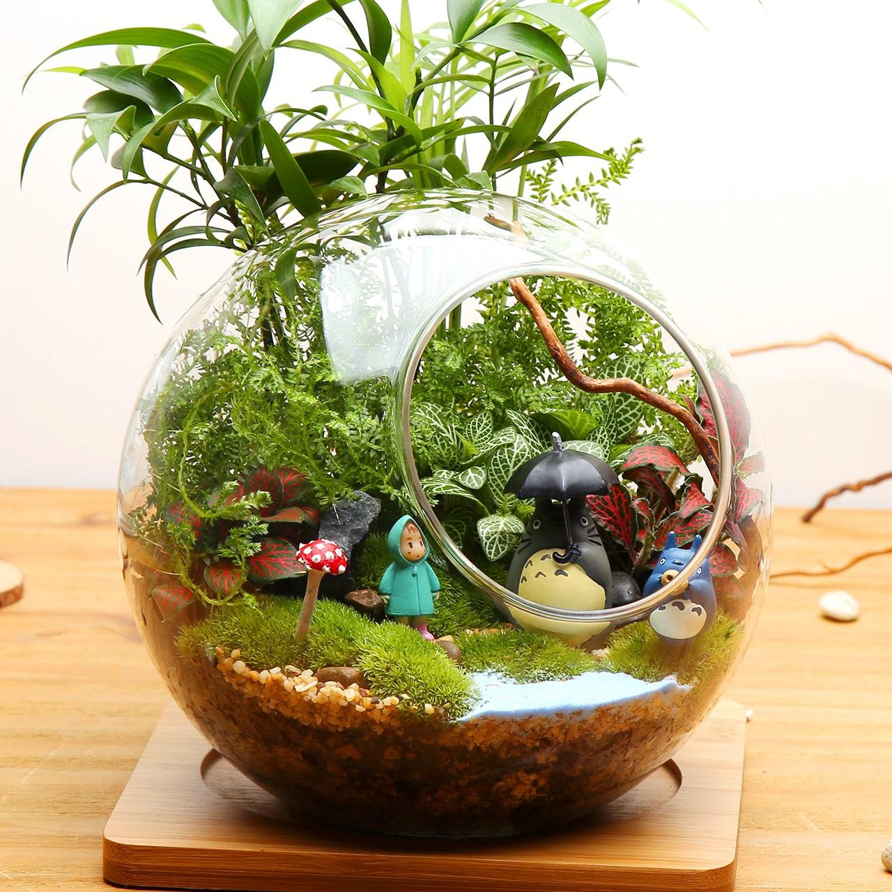 for Mini aquarium boule
