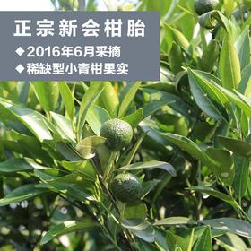 【非落地小柑胎】树摘新会柑胎仔 小青柑 正宗陈皮果茶 生晒  500g