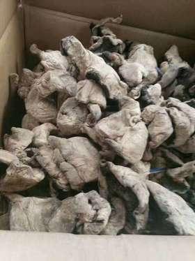 来自新疆巴里坤大草原,新疆献给江门人最好的礼物,新疆野生菇
