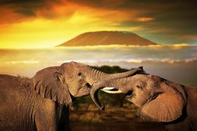 【大美非洲】2017魅力肯尼亚,野生动物大迁徒全年看(8天)