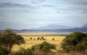 【大美非洲】2017激情坦桑尼亚,野生动物大迁徒全年看(9天)