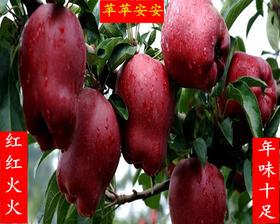 【美货】天然当地农家自产花牛蛇果新鲜花牛苹果5斤