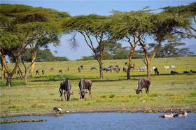 魅力肯尼亚、赤道雪山乞力马扎罗、树顶女王酒店 动物世界马赛马拉7天6晚