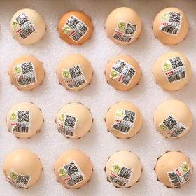 【南海网微商城】基哥的蛋 原生态的野外土鸡蛋 12盒