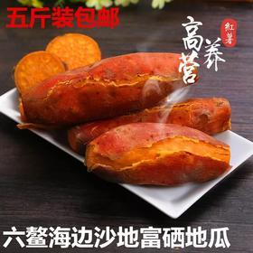 【新一季】福建六鳌沙地红蜜番薯土红薯红心地瓜小香薯新鲜农家蕃薯5斤装包邮