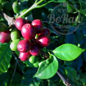*全网独家*咖啡樱桃高纤浆果烘焙专用粉,珍稀的美味减脂食材。