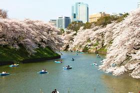 【樱花季】春季最热赏樱地——东京五日游