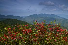 【公司】相约吴越古道:赏高山杜鹃,看壮美天池,探幽深峡谷(2天)