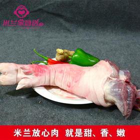 米兰放心肉/猪脚约500斤