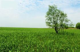 【定制】去崇明岛放空:徜徉乡间小路,漫步最美西沙湿地芦苇荡,逗螃蟹(1天活动)