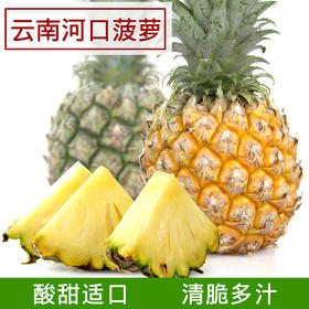 【产地寻味】云南河口小菠萝8斤装现摘现发全国限区包邮