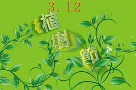 朱雀公园植树节专用树苗1棵