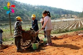 【3月11日】植树节--种下一抹绿色,收获一年希望(亲子团)