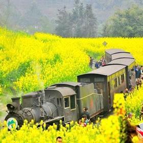 【妈网旅游】嘉阳小火车穿越时空,感受油菜花一日游
