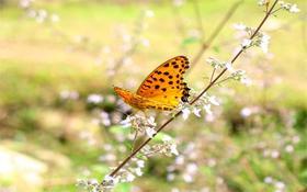 【两大一小】亚洲大型蝴蝶观赏大棚,两千多种蝴蝶尽在光明蝴蝶谷!
