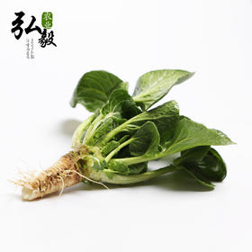 【弘毅生态农场】六不用 新鲜苔菜 (2斤)顺季节露地种植 三份包邮