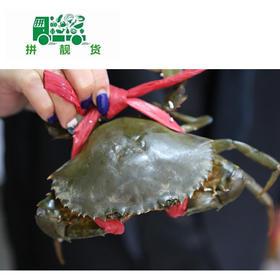 赤蟹(1斤130元,先收1斤定金130,多退少补)