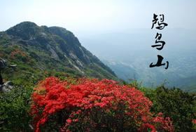 4.23登鸬鸟山,赏山顶杜鹃花开成海,看漫山红遍(1天活动)