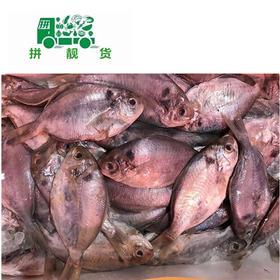 海鲫鱼(1斤28元,先收1斤定金28,多退少补)