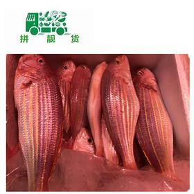 红杉鱼(1斤33元,先收1斤定金33,多退少补)