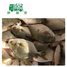 金枪鱼(1斤20元,先收1斤半定金30,多退少补)