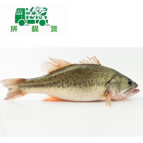 鲈鱼(1斤23.5元,先收1斤定金23.5,多退少补)