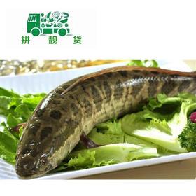 生鱼 (1斤17元,先收2斤定金34,多退少补)