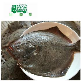 多宝鱼(1斤38元,先收1斤半定金57,多退少补)