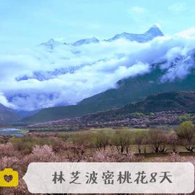高山牦牛:波密林芝桃花深度8日 林芝、大峡谷、索松、直白、岗乡