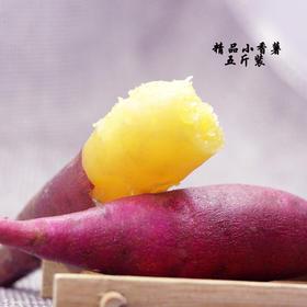 【产地寻味】现挖 临安天目山沙地 小香薯 新鲜迷你小红薯地瓜山芋5斤包邮蔬菜