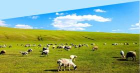 2017深入呼伦贝尔草原大环线--敖鲁古雅原始狩猎部落--亚洲第一湿地--边境满洲里-春晚分会场 6日活动