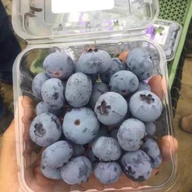 【进口水果】特级蓝莓 蓝莓鲜果 新鲜水果 进口蓝莓