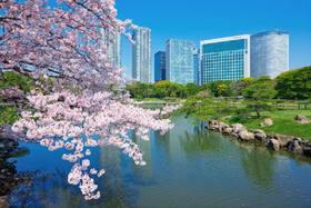 【半日游 · 上午】东京樱花物语・醉美赏樱半日游