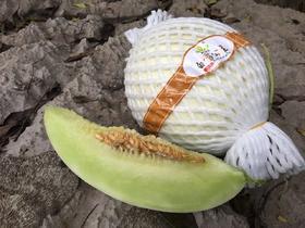 海南白雪公主蜜瓜9.8元/斤,第二个半价(3.5kg/个)
