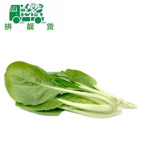 土白菜(拍下大概重量 多退少补)