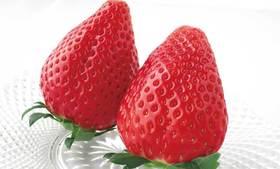 【一日游】栃木特级草莓吃到饱&日光江户村