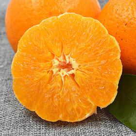 【预售4月10日发货】四川丹棱不知火丑柑橘(净重4公斤,内含18个左右,限乌市地址!)