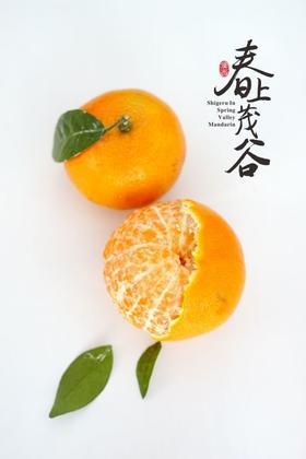 【好吃甜如蜜,鲜果正当季】茂谷柑——仅限三日大促销,惊艳你的味蕾!飞机盒装