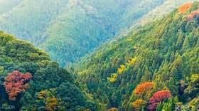 【一日游】探寻日本佛教圣地:高野山自由行