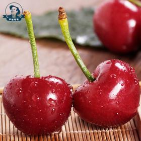 【产地寻味】烟台大樱桃车厘子新鲜水果现摘现发顺丰包邮