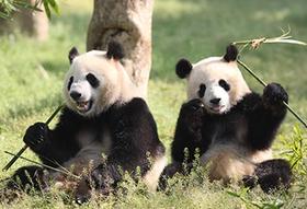 4/22上海野生动物园1日游,昆山论坛带您和动物朋友来一场亲密之旅