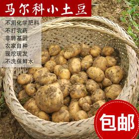 三峡高山马尔科富硒小土豆(大小硬币——乒乓球)