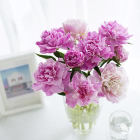 送芍药再送花瓶!月度自然系列Pro版,送芍药一捧,明星花瓶「小哥」一只