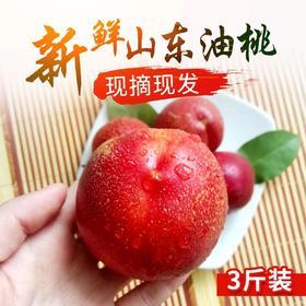 【顺丰】当季脆甜山东油桃黄心红油桃新鲜水果 山东特产红肉油桃桃子4.5斤装包邮