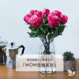 WOW玫瑰系列 | 5月13日 5月15日首次收花。肯尼亚进口玫瑰,热情之花,7-9枝/束,2束或4束任选